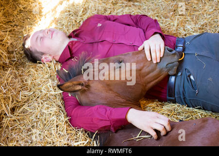 Iberian Sport Horse. Rider and bay foal resting together in a stable. Germany - Stock Image
