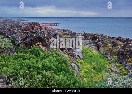 Small trees and ferns are growing close to rocks protecting them from the harsh winds at the coast of Varangerfjorden - Stock Image