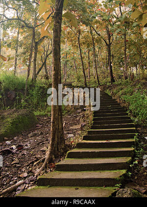 Steps in the middle of the autumn forest - Stock Image