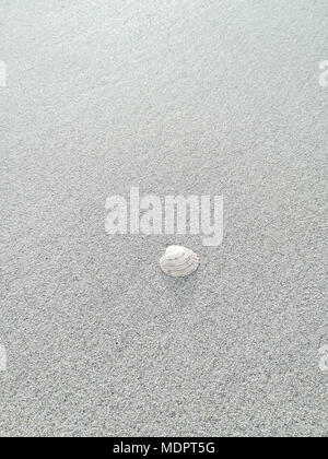 The lonely seashell - Stock Image