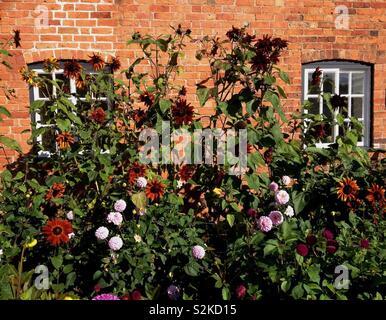 Autumn Flowers in Walled Garden - Stock Image