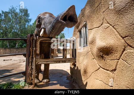 Dvur Kralove nad Labem Zoo, Czech Republic. 26th June 2019. Breeder Andrea Havlikova showered African bush elephant (Loxodonta africana) females Saly (pictured) and Umbu in the Dvur Kralove nad Labem Zoo, Czech Republic, on June 26, 2019. African animals have a special regime on hot days, and breeders give them more refreshment. (CTK Photo/David Tanecek) Credit: CTK/Alamy Live News - Stock Image