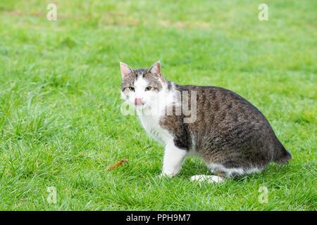 Cat goods - Stock Image