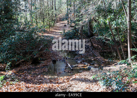 Creek crosses foot path leading to Rainbow Falls in Nantahala National Forest, Gorges State Park, Cashiers, North - Stock Image