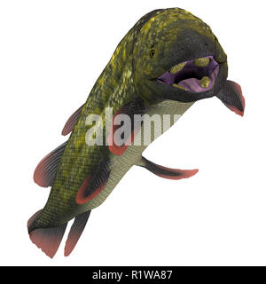 Dipterus was a freshwater fish species that lived in swamps and bayous of Europe and North America during the Devonian and Carboniferous Periods . - Stock Image