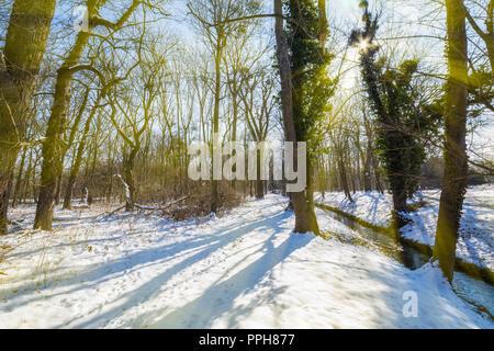 Winter season - Stock Image