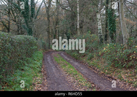 a muddy winter track through Binsted woods. Binsted is a village steeped in folklore & is under threat due to Arundel bypass, West Sussex, England - Stock Image