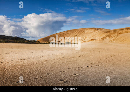 Te Paki giant sand dunes, Northland, New Zealand. - Stock Image