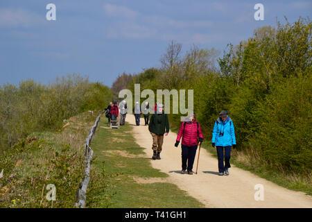 College Lake Nature Reserve, Tring, Hertfordshire, UK - Stock Image