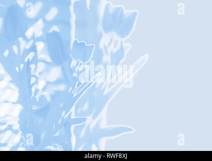 Modern contemporary floral abstract blue background with spring tulips double exposure graphic design for Easter Mothers Day and other spring concepts - Stock Image