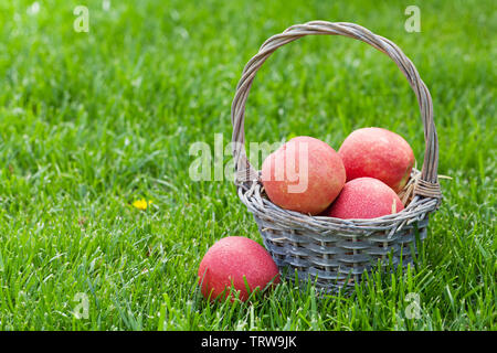Fresh garden red apples in basket. On outdoor grass meadow with copy space for your text - Stock Image