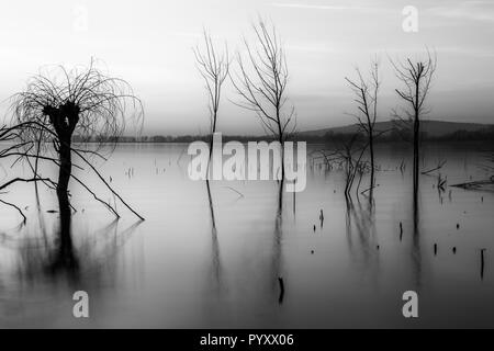 Beautiful sunset at Trasimeno lake (Umbria), with perfectly still water and skeletal trees - Stock Image