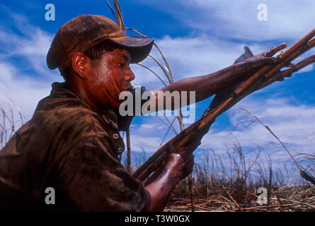 Child labor, Guarani indigenous 14-years old boy works as sugarcane cutter - Brazilian ethanol production. Mato Grosso do Sul do State. - Stock Image