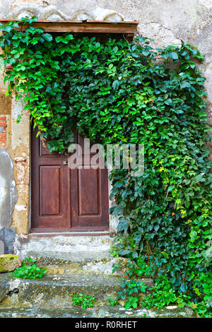 Wooden entrance door with green creeper, Sorano, Province of Grosseto, Tuscany, Italy - Stock Image