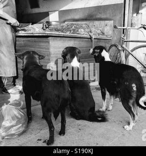 Dogs outside buthchers - Stock Image