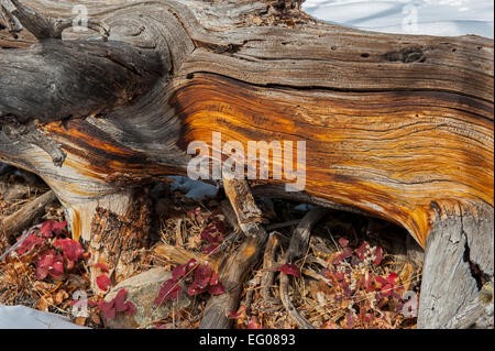 Wood pieces in winter - Stock Image