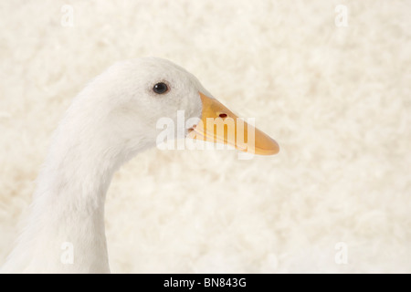 Pay attention, I'm about to speak - Stock Image