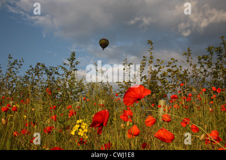 Balloon ride over Heartwood Forest - Stock Image