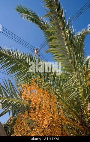 palm malta - Stock Image