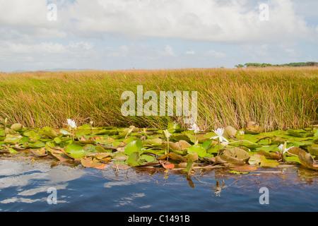 Nariva Swamp, Trinidad - Stock Image