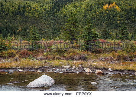 Moose creek in Denali national park - Alaska (USA) - Stock Image