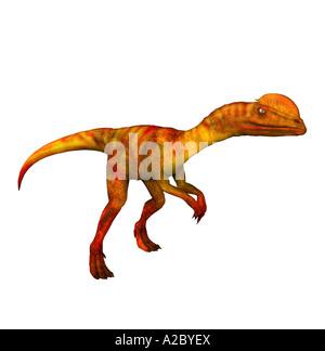 dinosaur Dilophosaurus - Stock Image