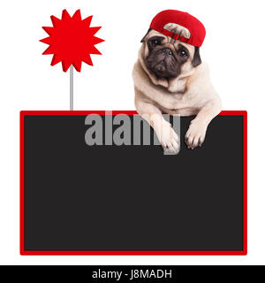 cute pug puppy dog wearing red cap, hanging with paws on blank blackboard with sale sign, isolated on white background - Stock Image