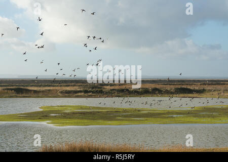 RSPB Medmerry Nature Reserve by the coast at Medmerry, West Sussex, UK, with a flock of ducks and geese flying over the stilt pools. Birds. - Stock Image