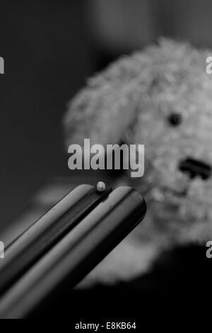 A small plush dog is faced with the muzzle of a gun. - Stock Image