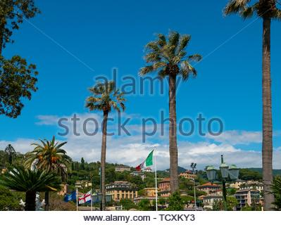 Giant tree ferns, Italy. - Stock Image