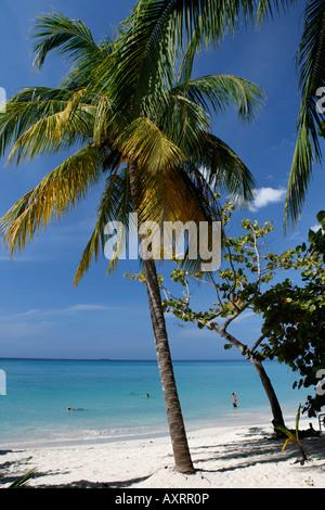 Jamaica Negril beach palm trees - Stock Image