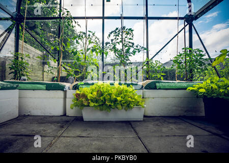 Green plants in a small greenhouse in a garden with blue sky in the background - Stock Image