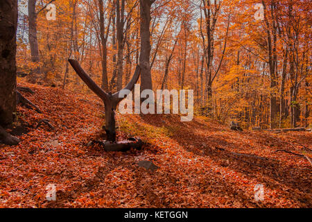 Forest in fall - Stock Image