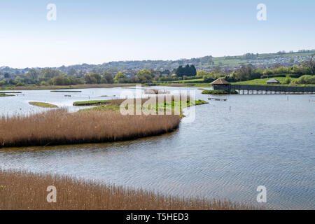 Seaton wetlands, sitting beside the River Axe in the Axe valley, Devon, England, UK - Stock Image