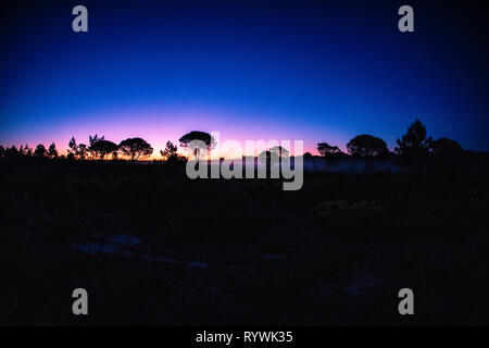 Dawn over the pine forest of Comporta on the Portuguese Alentejo Coast - Stock Image