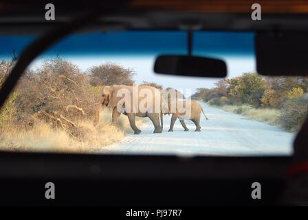 elephant mother and his cub Etosha Namibia - Stock Image