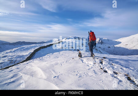 Hiker walking their dog along Hartsop Above How above Deepdale beck that leads towards Hart Crag. English Lake District. - Stock Image
