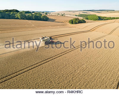 Harvest aerial combine harvester cutting summer wheat field farm crop with tractor trailer - Stock Image