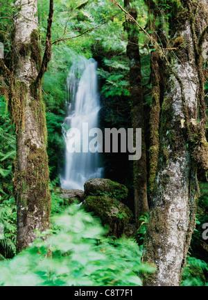 Merriman Waterfall near Lake Quinault Washington State. - Stock Image