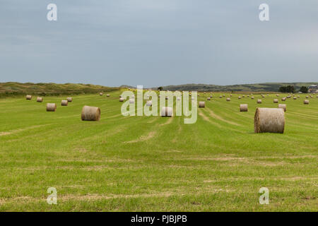 Hay-bales in a field on the outskirts of Newburgh, Aberdeenshire, Scotland. - Stock Image