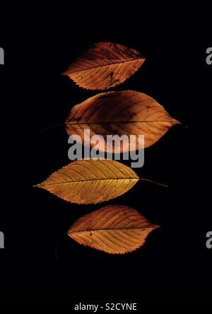 Four Autumn leaves - Stock Image
