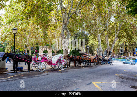 Horse carriages in the old town of Palma, historic city centre, Ciutat Antiga, Palma de Mallorca, Majorca, Balearic Islands, Med - Stock Image