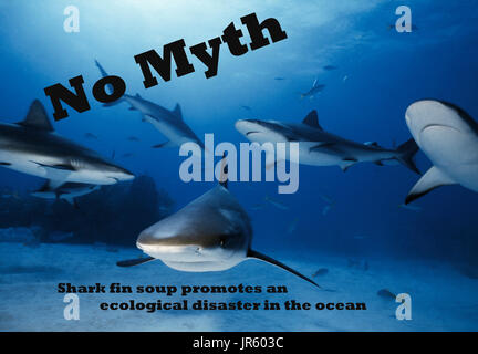 GBI, Freeport, Caribbean Reef Sharks, underwater, group of 6 - Stock Image