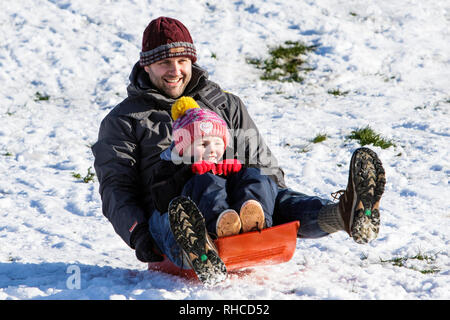 Chippenham, Wiltshire, UK. 2nd February, 2019. A man and a child enjoying the snow before it thaws are pictured in a local park in Chippenham as they slide down a hill on a sledge. Credit: Lynchpics/Alamy Live News - Stock Image