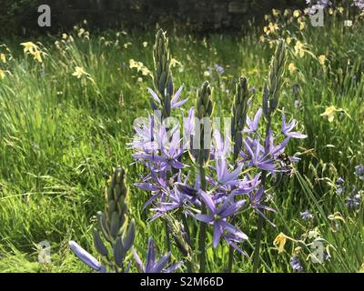 Purple flowers on a sunny day. - Stock Image