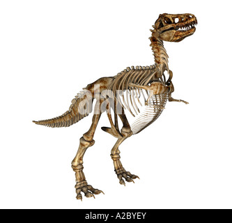 Tyrannosaurus rex skeleton - Stock Image
