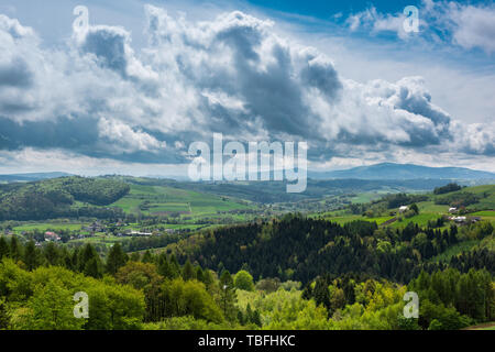 Green hills,pasture and forest till horizon in Ciezkowice,Poland. - Stock Image