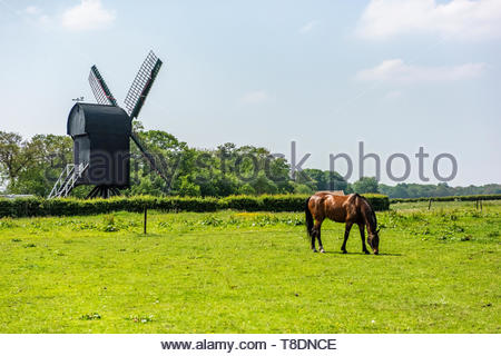 Groningen, Netherlands. Rural, agricultural landscape with Grazing Horse and Mill. - Stock Image