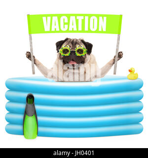 smiling summer pug dog with goggles,flipper and banner sign with text vacation in inflatable pool, isolated on white - Stock Image