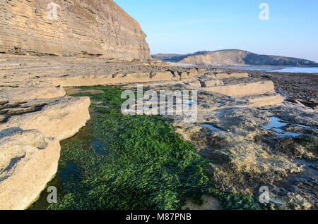 Seaweed contrasting with the rocky shoreline of Dunraven Bay in Southerndown, South Wales - Stock Image